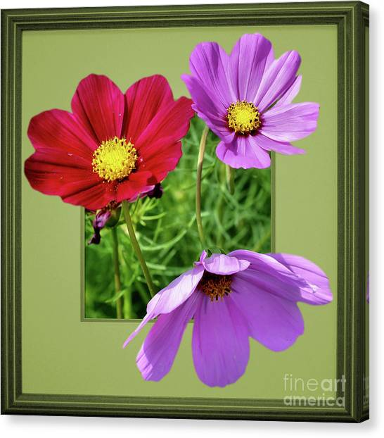 Cosmos Flower Peeking Out Canvas Print
