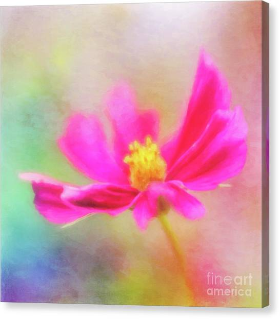 Cosmos Flowers Love To Dance Canvas Print