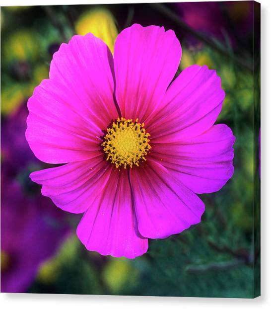 Canvas Print featuring the photograph Cosmos by John Brink