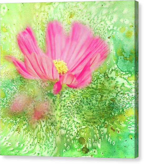 Cosmos On Green Canvas Print