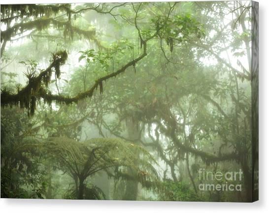 Costa Rican Cloud Forest Canvas Print by Matt Tilghman