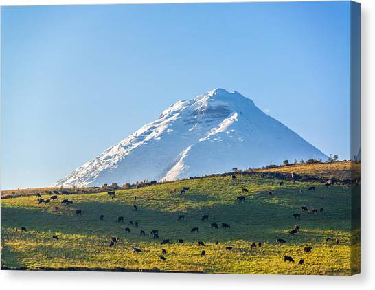 Cotopaxi Canvas Print - Cotopaxi Volcano And Livestock by Jess Kraft