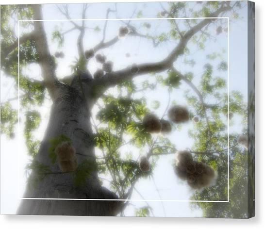 Stuffing Canvas Print - Cotton Ball Tree by Douglas Barnard