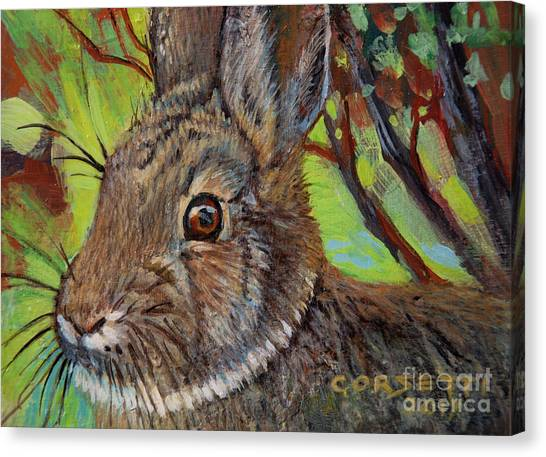 Cotton Tail Rabbit Canvas Print