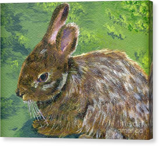 Cottontail Canvas Print