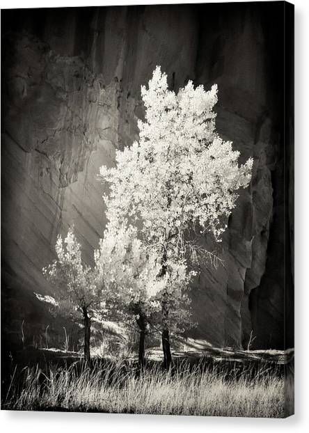 Capitol Reef National Park Canvas Print - Cottonwood And Canyon Wall by Joseph Smith