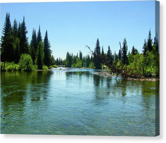 Cottonmouths Canvas Print - Cottonwood Creek by K Bradley Washburn