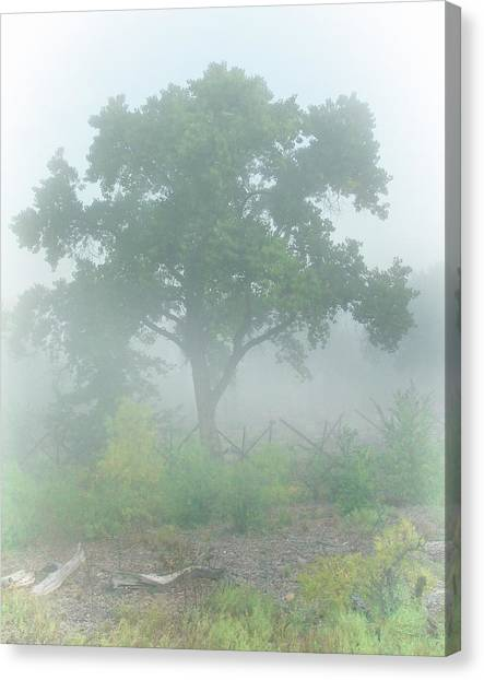 Cottonwood Tree In Fog Canvas Print