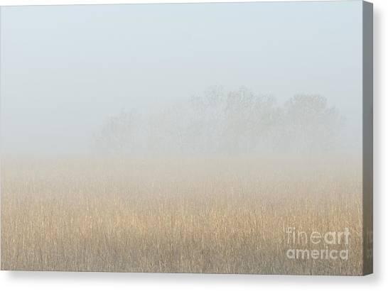 Cottonwood Trees In Fog Canvas Print by Fred Lassmann