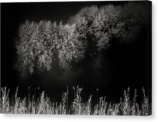 Cottonwoods And Grasses Canvas Print by Joseph Smith