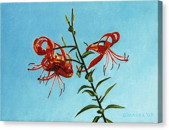 Cotttage Tiger Lilies Canvas Print by Allan OMarra