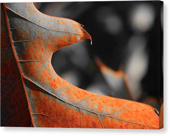Cougar Rusty Leaf Detail Canvas Print