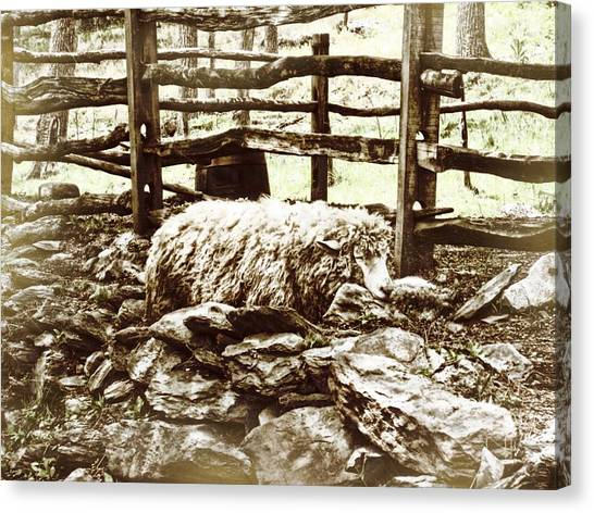 Counting Sheep Canvas Print by JAMART Photography