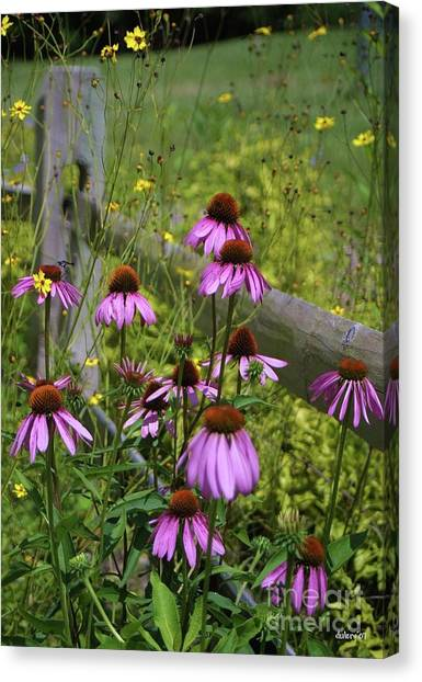 Country Coneflowers Canvas Print