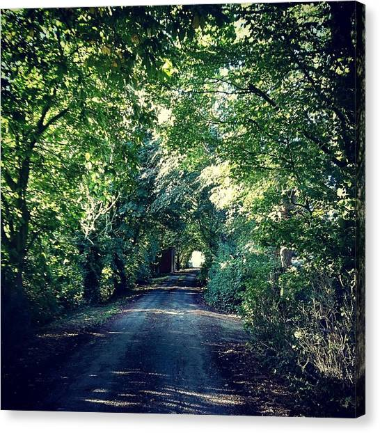 Country Lane, Tree Tunnel Canvas Print