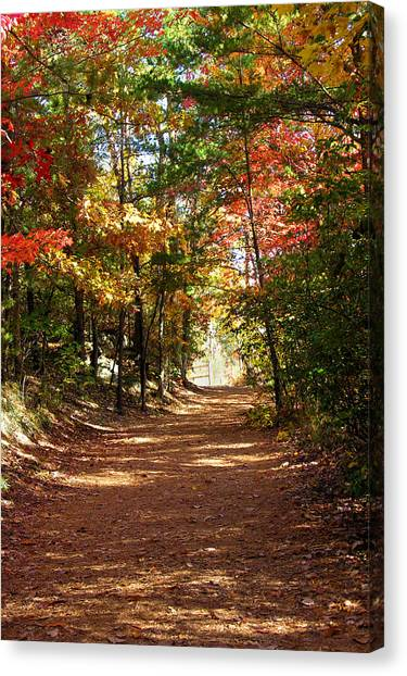 Country Path Canvas Print by Ralph  Perdomo