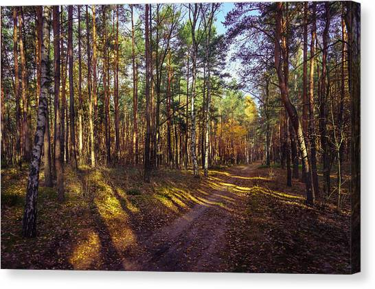 Country Road Through The Forest Canvas Print