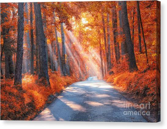 Country Roads Canvas Print