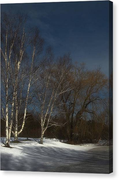 Country Roadside Birch Canvas Print