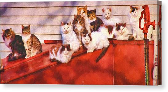 Countryside Cats Canvas Print