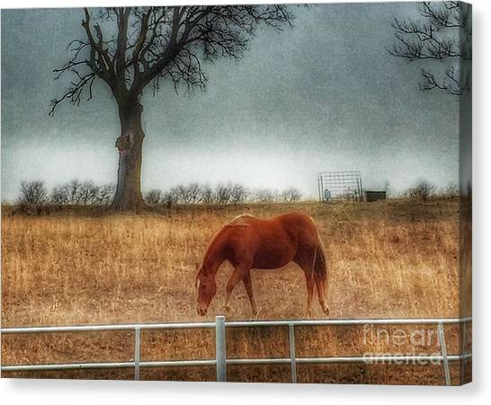 County Road 4100 Canvas Print