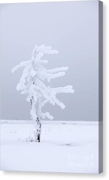 Covered In Frost Canvas Print by Tim Grams
