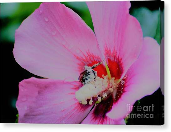 Covered In Pollen Canvas Print