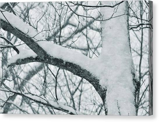 Covered In White Canvas Print by JAMART Photography