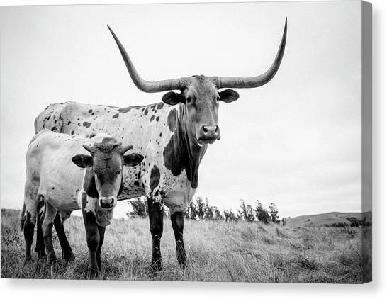 Cow Canvas Print - Cow And Calf In The Pasture by Sherri Rieck