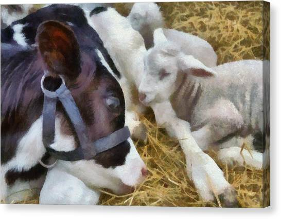 Cow And Lambs Canvas Print