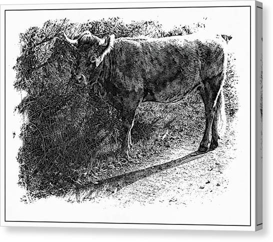 Contemporary Art Canvas Print - Cow by Contemporary Art