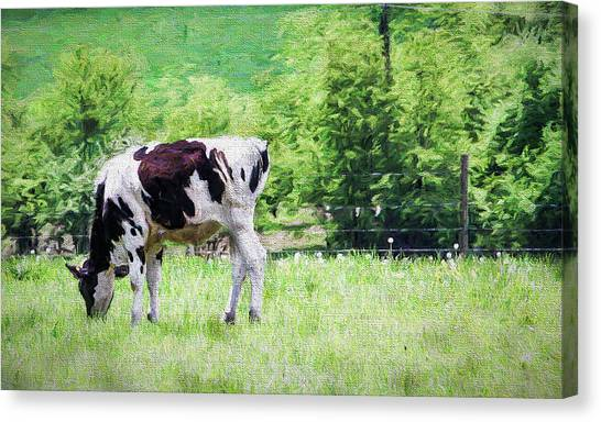 Cow Grazing Canvas Print