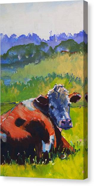 Cow Lying Down On A Sunny Day Canvas Print