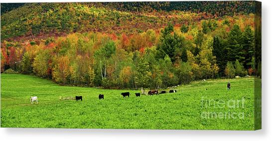 Cow Pasture In Fall Canvas Print
