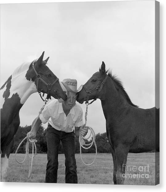 Funny Horses Canvas Print - Cowboy Between Two Horses, C.1960s by B. Taylor/ClassicStock