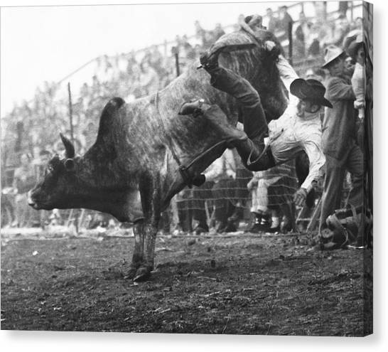 Bull Riding Canvas Print - Cowboy Departing A Bull by Underwood Archives