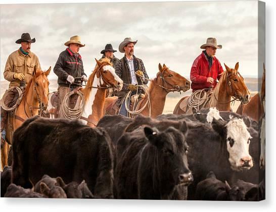 Angus Steer Canvas Print - Cowboy Posse by Todd Klassy
