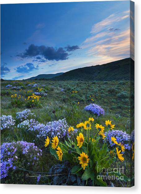 Phlox Canvas Print - Cowiche Spring Sunset by Mike Dawson