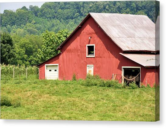 Cows In The Barn Canvas Print by Jan Amiss Photography