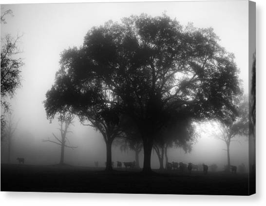Cows In The Mist Canvas Print by David Mcchesney