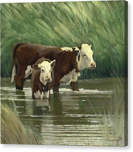 Cows In The Pond Canvas Print