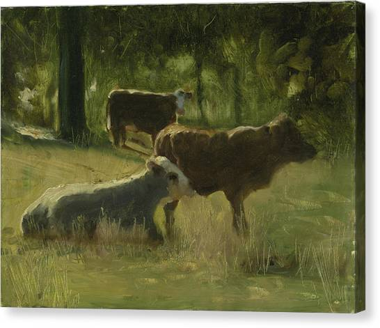 Cows In The Sun Canvas Print