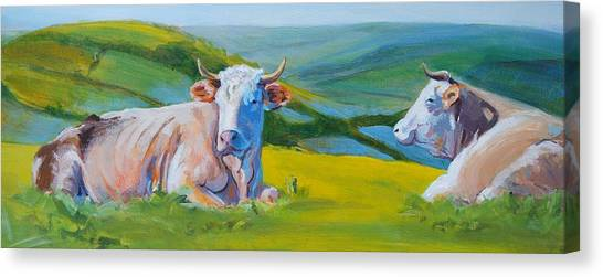 Cows Lying Down In Devon Hills Canvas Print