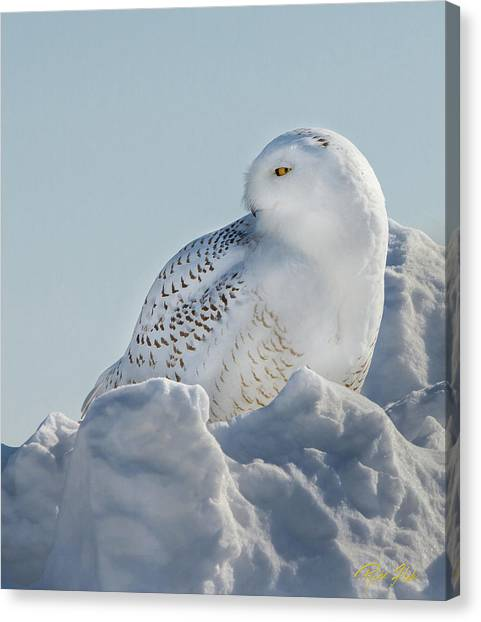 Canvas Print featuring the photograph Coy Snowy Owl by Rikk Flohr