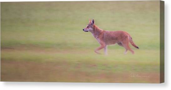 Coyote 0313 Canvas Print