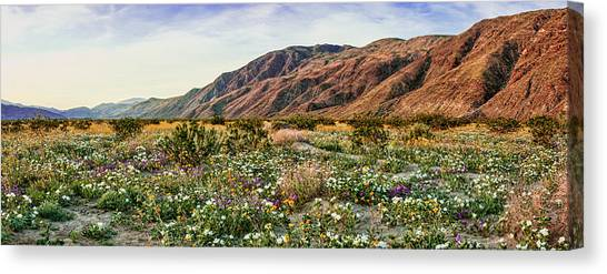 Coyote Canyon Sweet Light Canvas Print