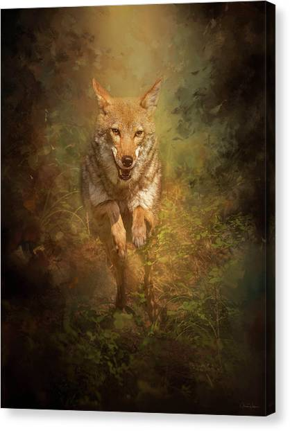 Coyote Energy Canvas Print
