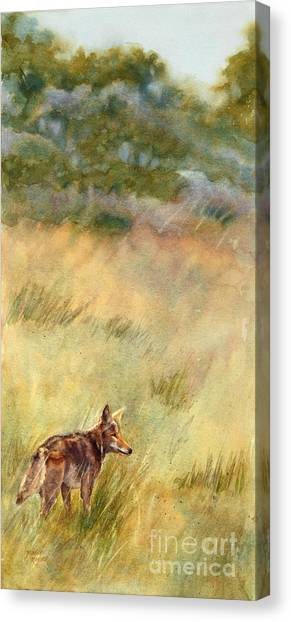 Coyote Santa Rosa Plateau Canvas Print