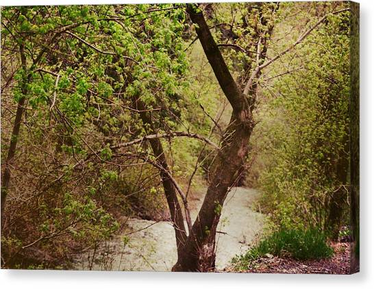 Cozy Stream In American Fork Canyon Utah Canvas Print