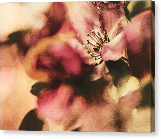 Crab Apple Blossoms IIi Canvas Print